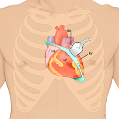 Heart: Anatomy & Physiology Module