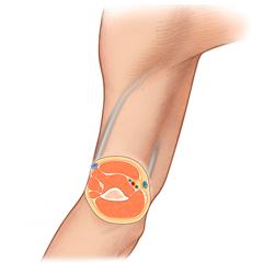 Soft-Tissue: Anatomy & Physiology Module