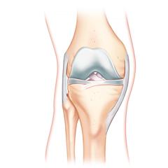Knee: Anatomy & Physiology Module
