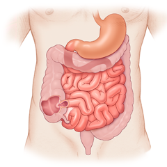 GI Tract: Anatomy & Physiology Module