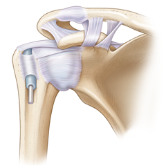 Shoulder: Anatomy & Physiology Module
